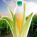 Om maisstilvelse